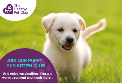 Join The Healthy Pet Club puppies club today